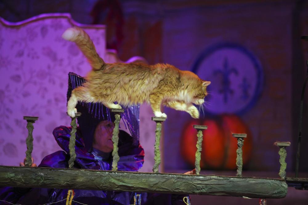 Цирк им дурова купить билеты татарский драматический театр афиша челны